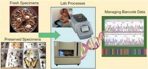 DNABarcoding