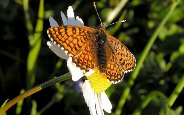 sn-butterflies